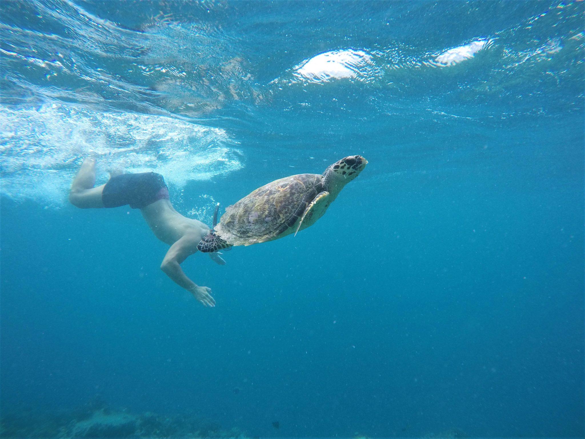 Duiken en snorkelen met schildpad