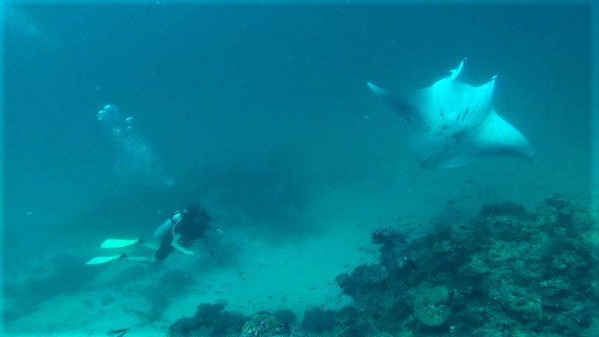 Duiken in de Malediven met een reuzenmanta