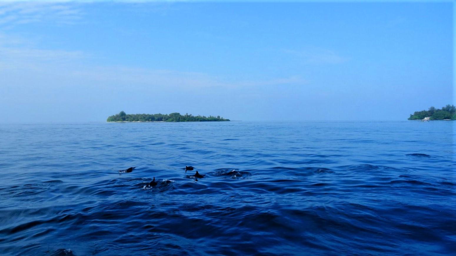 Dolfijnen zwemmen in de Malediven